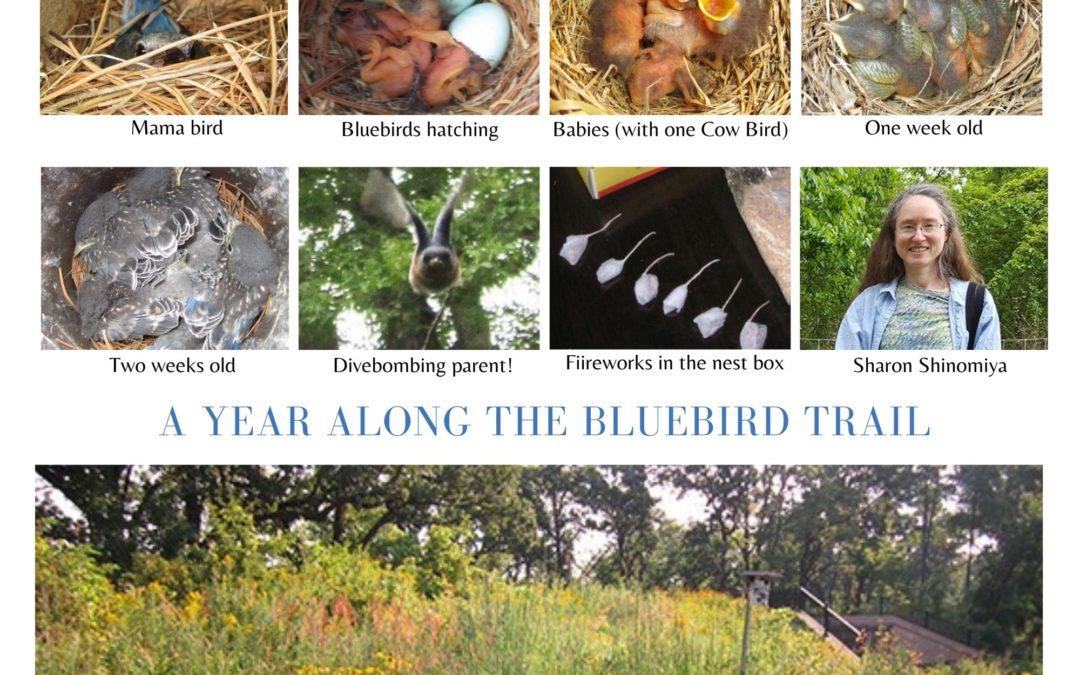 Volunteer Spotlight: Sharon Shinomiya on the Bluebird Trail
