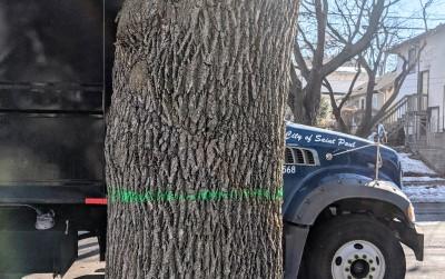 I Wish I Had Saved My Boulevard Trees!