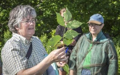 Volunteer Spotlight: Como Woodland Advisors