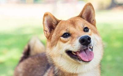 Building a Dog Park with Dogecoin